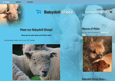 Babydoll Sheep Website